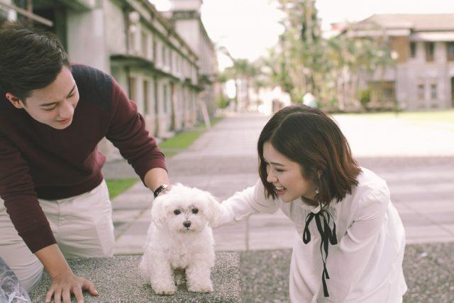 suni ha linh with dog